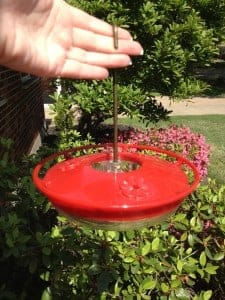 Best Hummingbird Feeder!